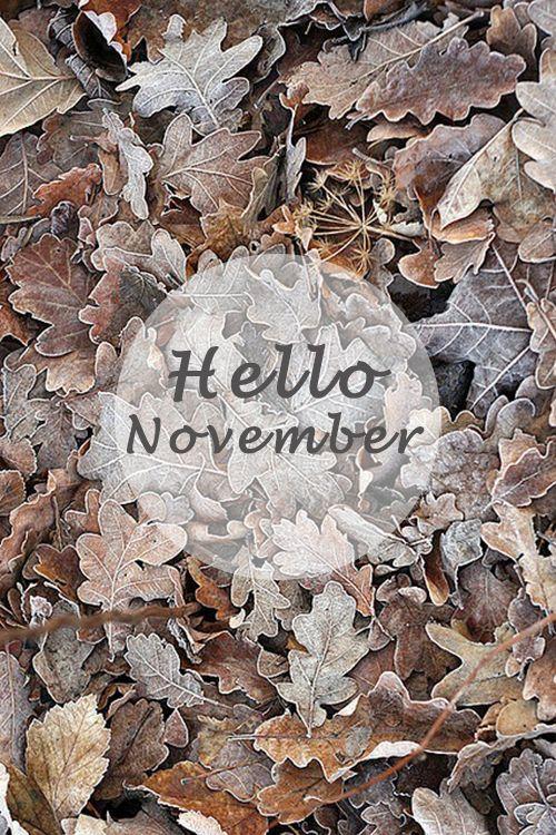 hello novemnber